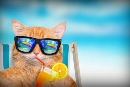 Katzen-Urlaub